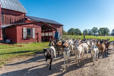 Pine Island Community Farm