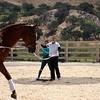96A Green Horse Compulsories with 3H3 Peggy Van Hook & 4K9 Desiree Clark on Walter
