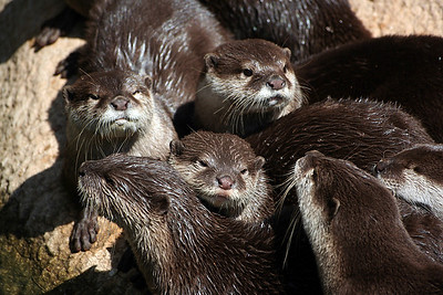 This photo was taken at the Atlanta Zoo.
