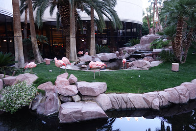 At the flamingo hotel