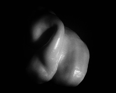 pepper B&W 2_3928