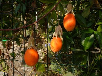 Côte d'Azur fruits de la passion