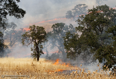 A vegetation fire burns between Humboldt Road and Highway 32 Wednesday July 19, 2017  in Chico, California.  (Emily Bertolino -- Enterprise-Record)
