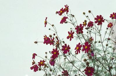 1987 Flowers
