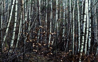 1987 Simply Wood