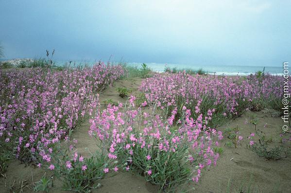 1995 Vegetation on Beach