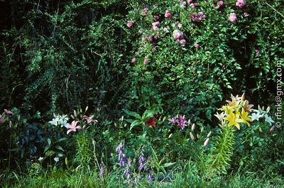 1996 Flora