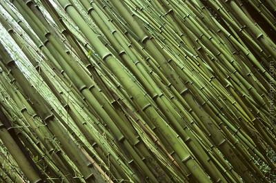 1997 Bamboo