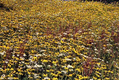 FlowerField Field