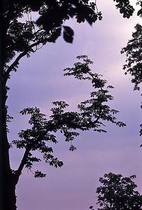 TreePrt