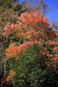 Tree1Fall Fall SeasonFall