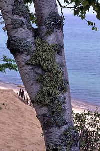 TreePrtTrk Trunk