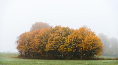 Trærne ved Storebrand en tåkefull oktobermorgen