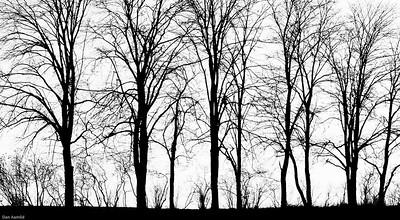 """Trær i siluett, """"Storebrand"""", Ås - Sorthvittutgave"""