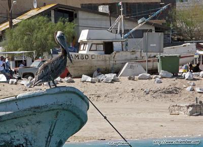 Puerto Penasco, Mexico.
