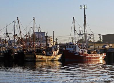 Shrimp boats, Puerto Penasco, Mexico.