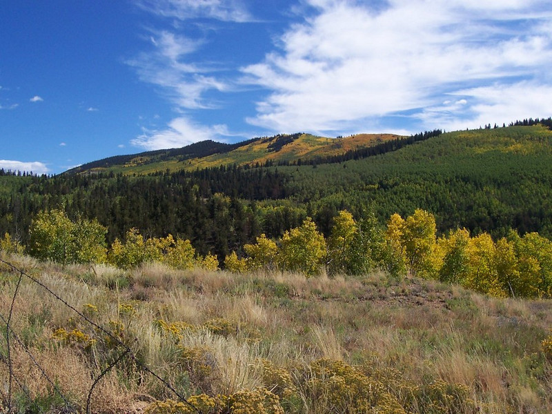Golden aspens above Southpark near Buena Vista, Co.