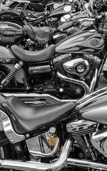 Harley Davidson #1