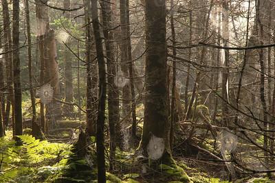 Toiles d'araignée sur le sentier James Callaghan (mont Gros-Morne) Parc national de Gros Morne, Terre-Neuve