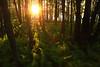 Coucher de soleil - Parc de la Yamaska