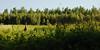 Cerf de Virgine (chevreuil) - Route Verte, parc de la Yamaska