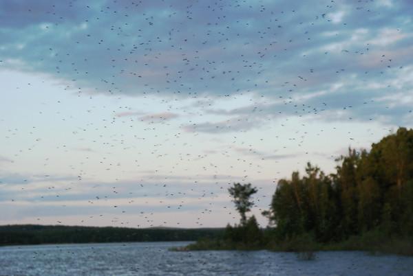 Moustiques - Parc de la Yamaska