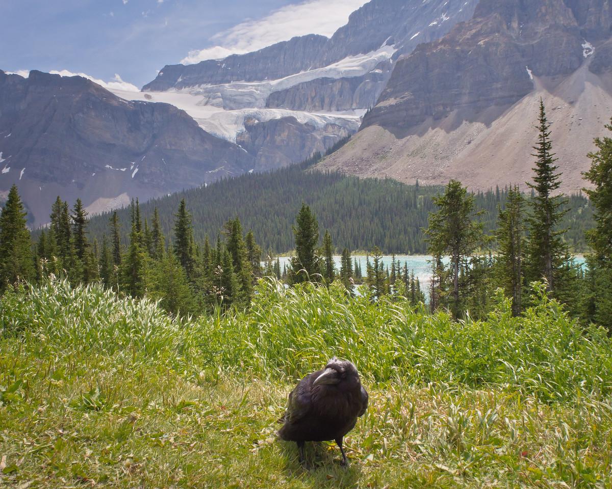 Raven & Crowfoot Glacier