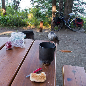 Bridge Lake campsite