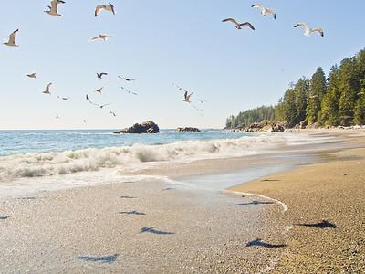 Seagulls flying - West Coast Trail