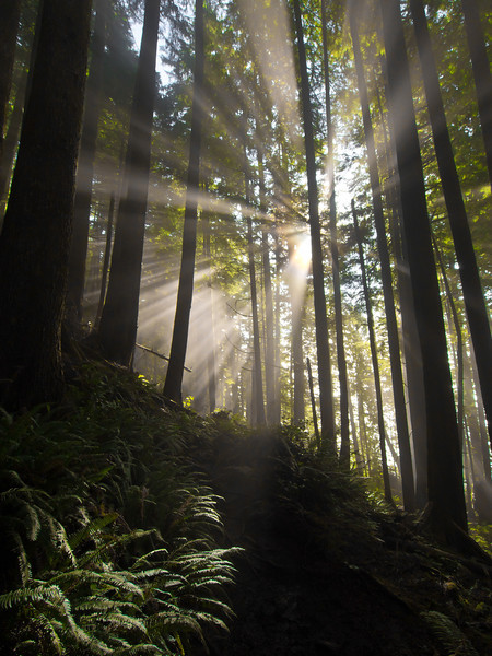 Sun through fog - West Coast Trail