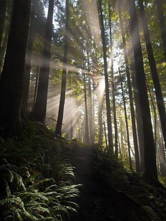 Sun through fog - West Coast Trail