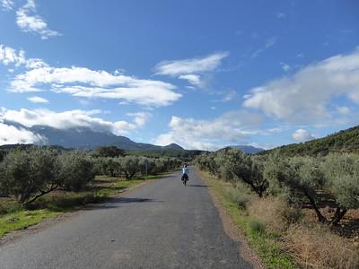 Olivenbäume bei El Burgo