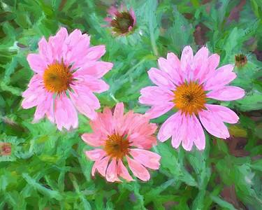 Flowers 2014.
