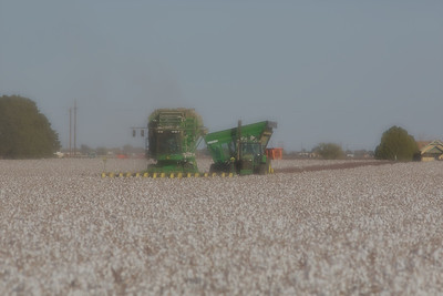 West Texas slide background: cotton harvest