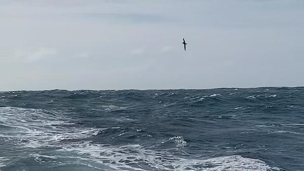 Day 57 – The Albatross's flight around Seaexplorer – Yacht Club de Monaco