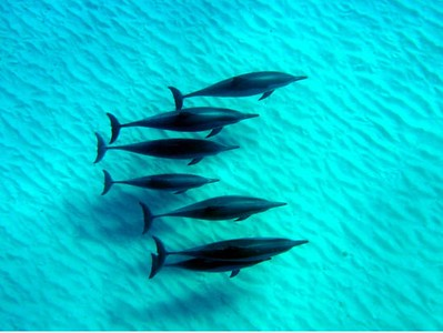 Aloha Dolphin Tours