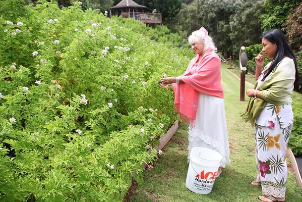 Aroma Farm Tour
