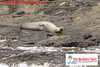 "<a href=""http://www.tombarefootshawaiitoursactivities.com/product.php?id=448&name=_Holo-Holo__Ni_ihau___Na_Pali"">There was a Hawaiian Monk Seal on the shore.</a>"