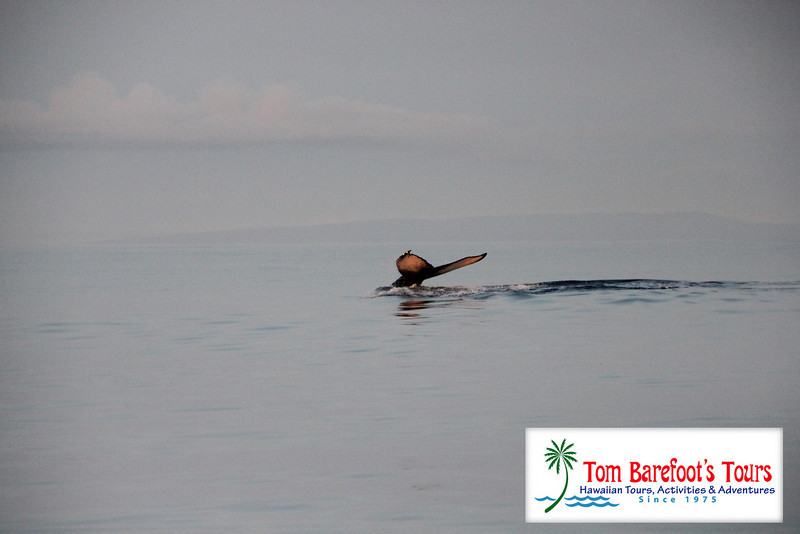 "<a title=""Make a reservation for Ocean Riders, Circumnavigte Lanai with Tom Barefoot's Tours"" href=""http://www.tombarefootshawaiitoursactivities.com/product.php?id=217&name=Full_Day_Snorkel"">Ocean Riders, Circumnavigte Lanai</a>"