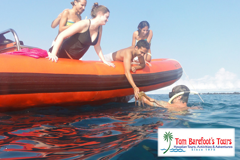 "<a title=""Make a reservation for Ocean Riders, Circumnavigte Lanai with Tom Barefoot's Tours"" href=""http://www.tombarefootshawaiitoursactivities.com/product.php?id=217&name=Full_Day_Snorkel"">Everyone was eager to check it out.</a>"