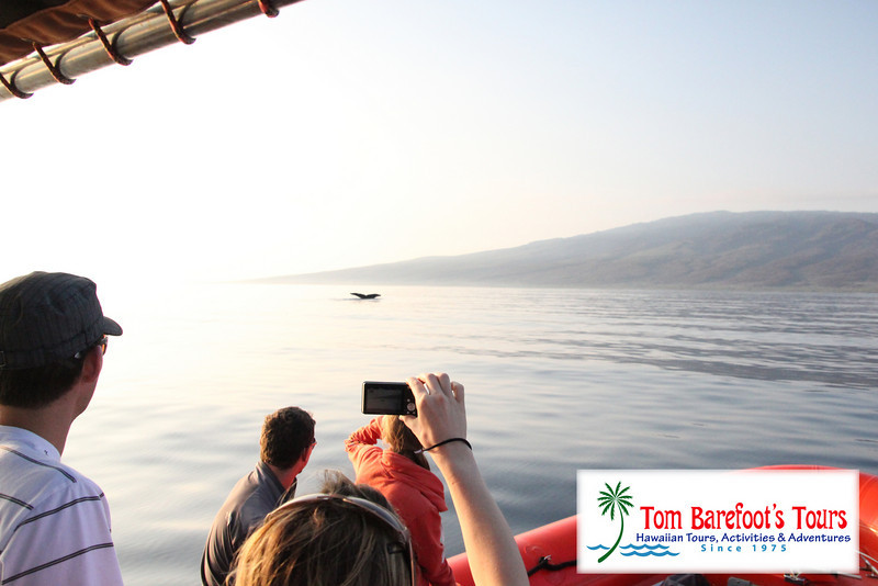 "<a title=""Make a reservation for Ocean Riders, Circumnavigte Lanai with Tom Barefoot's Tours"" href=""http://www.tombarefootshawaiitoursactivities.com/product.php?id=217&name=Full_Day_Snorkel"">We got some great pictures. </a>"