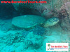 "<a href=""http://www.tombarefootshawaiitoursactivities.com/product.php?id=1758&name=AM_Dive_Charter"">....saw turtles.</a>"