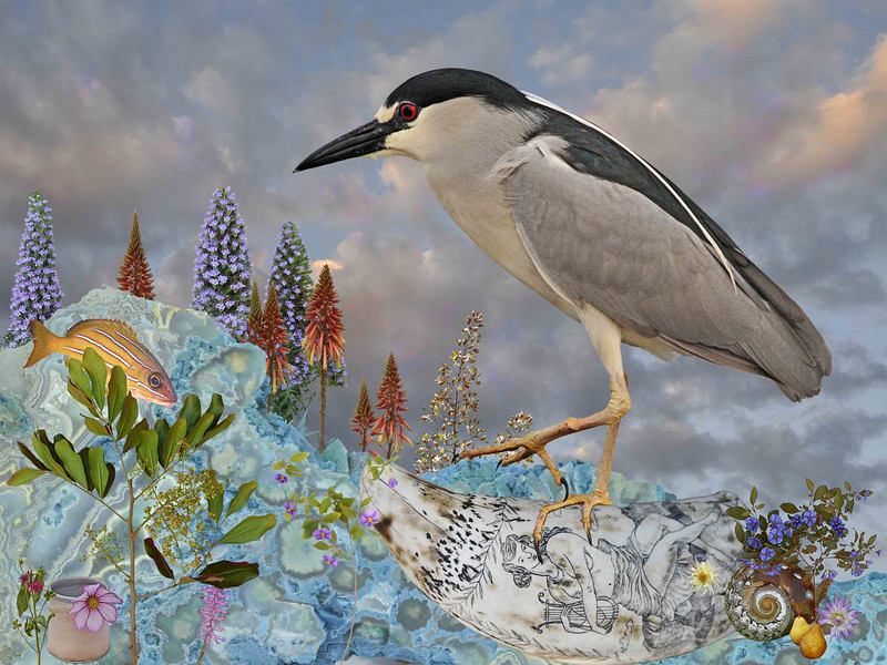 THE DREAM OF THE NIGHT HERON