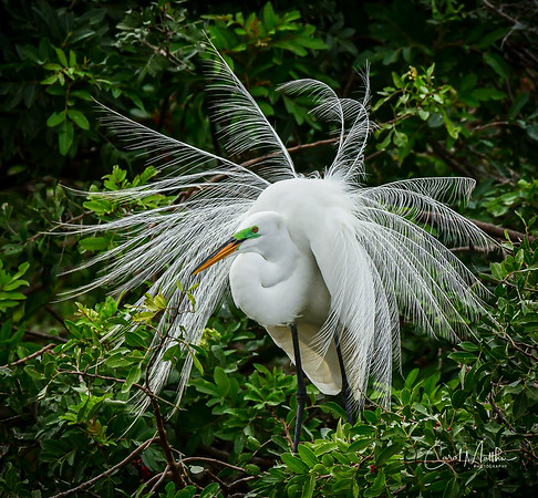 Egret pinwheel-2