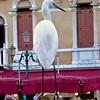 An Egret at the Rialto Bridge