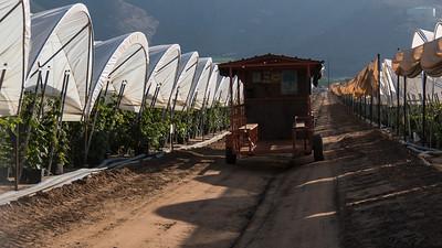 raspberry picker transport