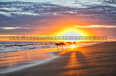 ventura birds sunset_7076