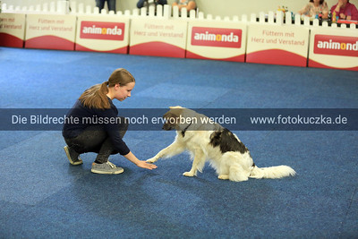 Dogdancing0015