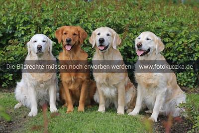 PK Hund&Katz 2018 0019