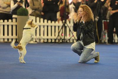 3. German Open und Crufts-Qualifikation für 2014  Dog Dancing German Open 2013 Lisa Joachimsky mit Foxita